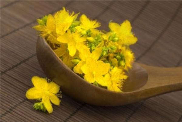 Šentjanževka - zdravilna rastlina