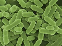 probiotiki in vitamini b12